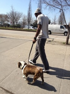 Amar'e and his dog, Spudd.